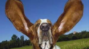 Programme anti ailes de chauve-souris